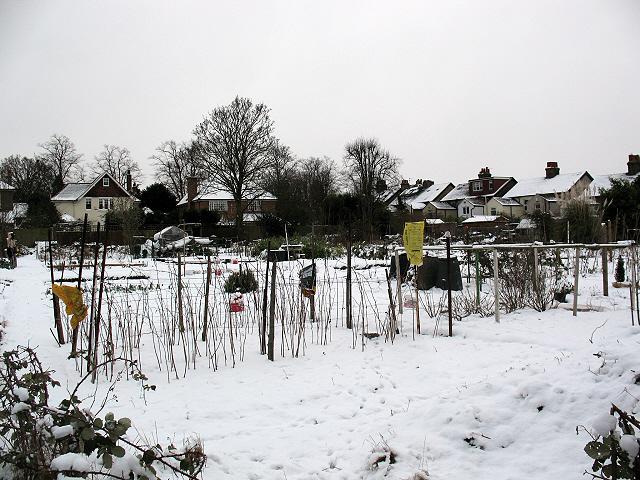 Allotments near Green Lane, Chislehurst