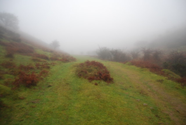 Macmillan Way West, Bicknoller Combe, in the mist