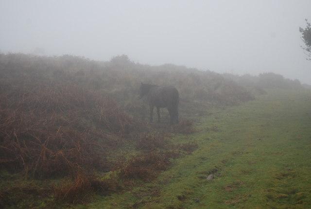 Pony in the mist