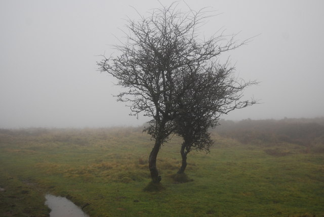 Two trees at the top of Bicknoller Combe