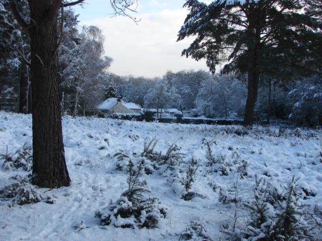 Sheets Heath, Brookwood