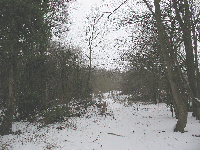 Track in the woods near the A20