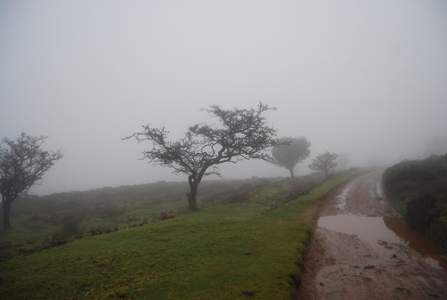 Gnarled trees in the mist