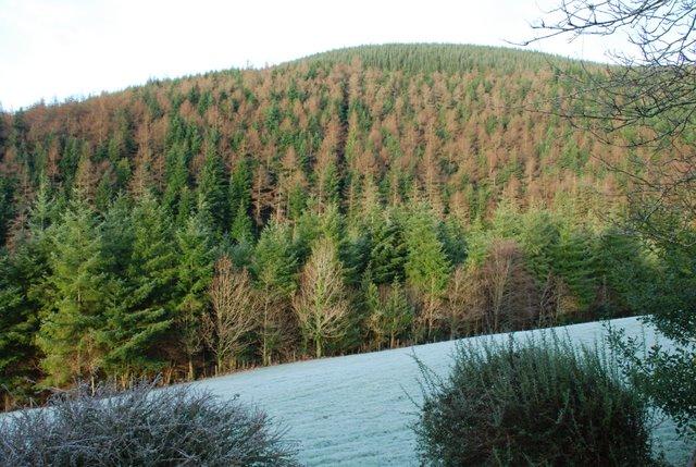 Talcen yr Allt from Nant-yr-Nele cottage