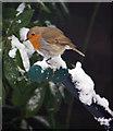 TQ2690 : Robin : Week 1