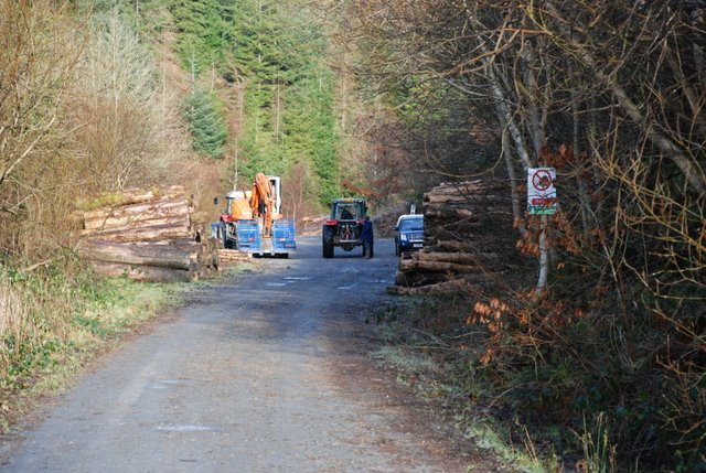 Forestry operations, Cwm Nele
