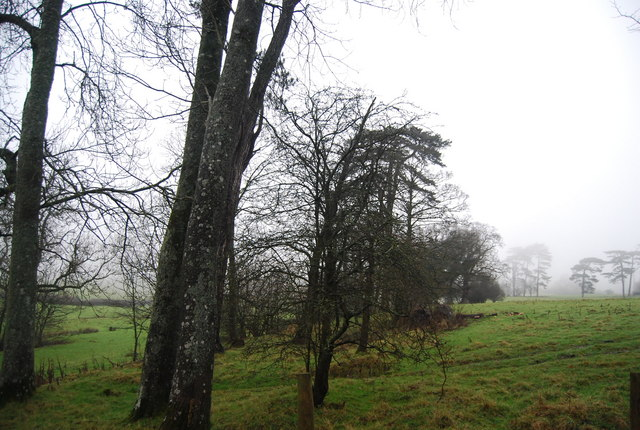 Trees by the A358, Crowcombe