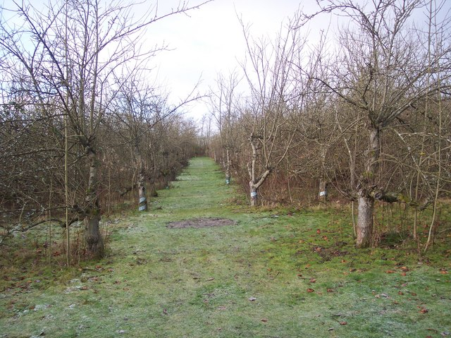 Footpath through the Orchard near Marle Place