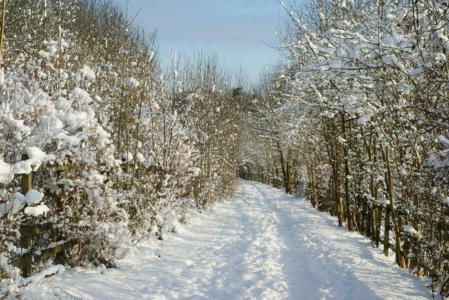 Bridleway Near Merstham, Surrey