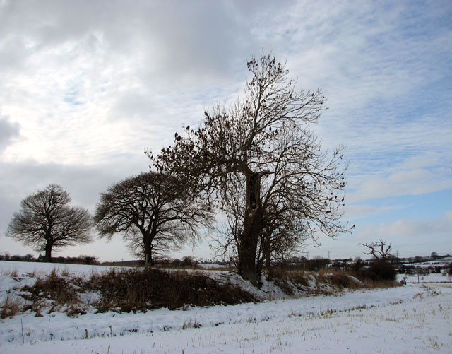 Wintry fields by Caistor St Edmund