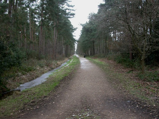 West Moors, forestry road