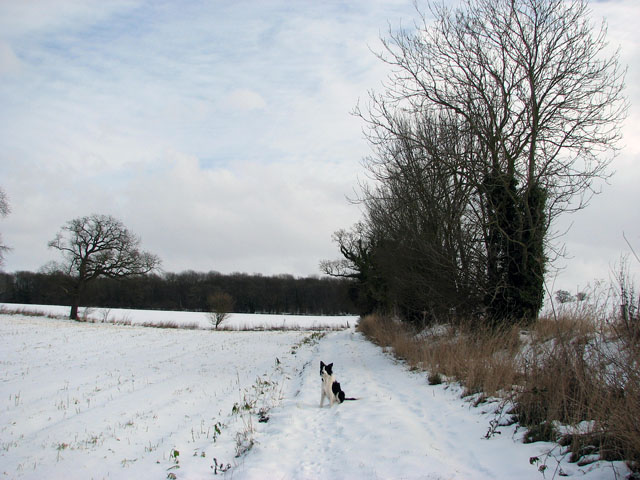 Approaching Arminghall Wood