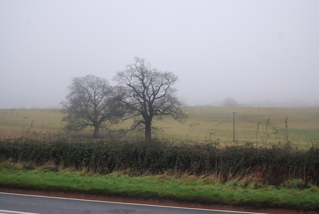 Two trees across the A358