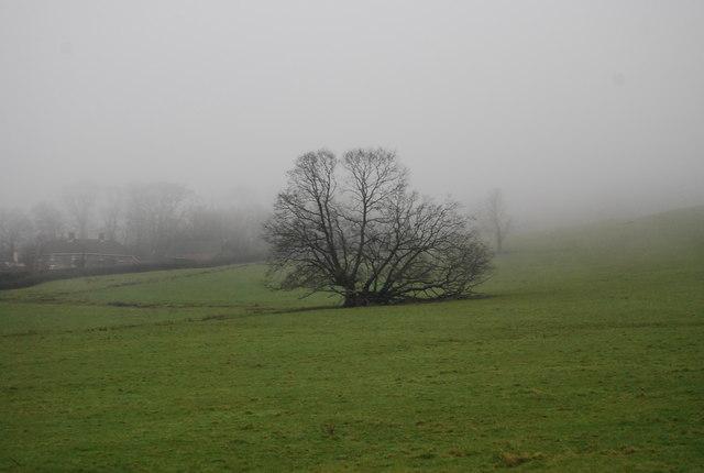 A single tree in a field