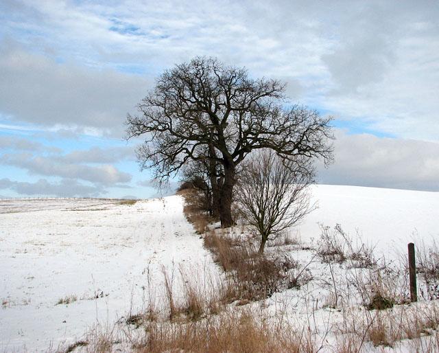 A wintry field boundary