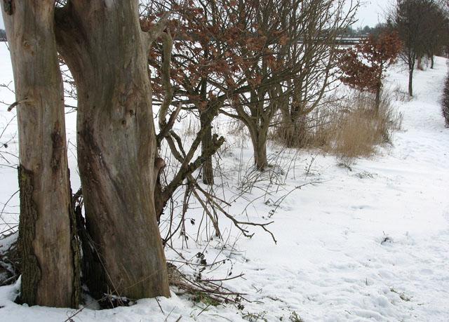 A hedge field boundary