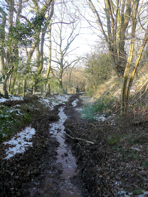 Bridleway in midwinter 2