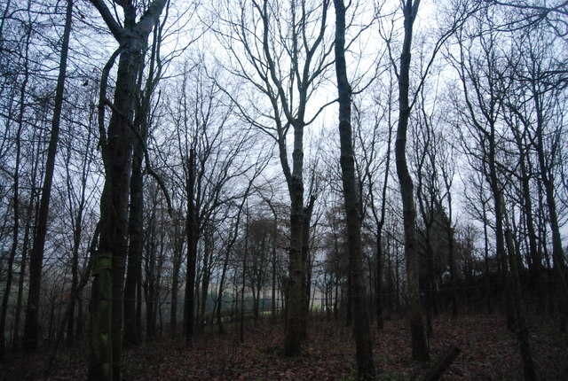 Woodland by Thorncombe Lane