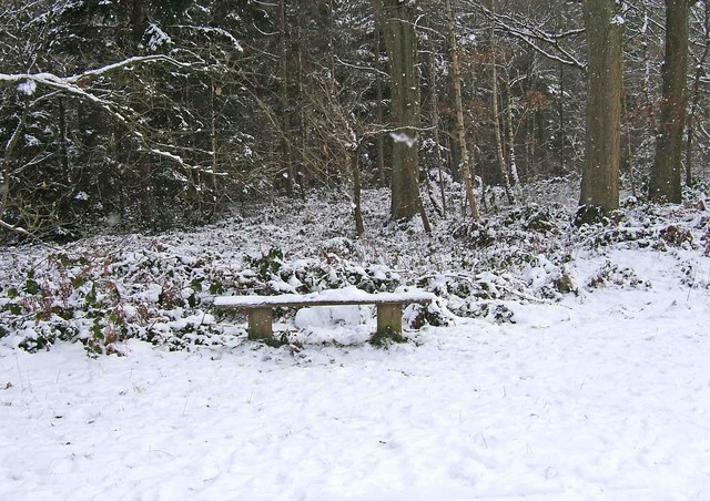 Wyre Forest - a seat in the snow