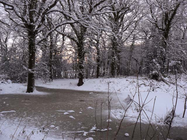 Snow on the pond at Cockshoot Wood