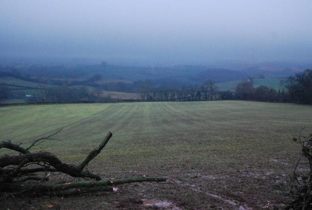 Field SW of Thorncombe Lane