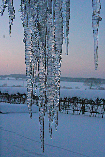Old Aylesfield icicles
