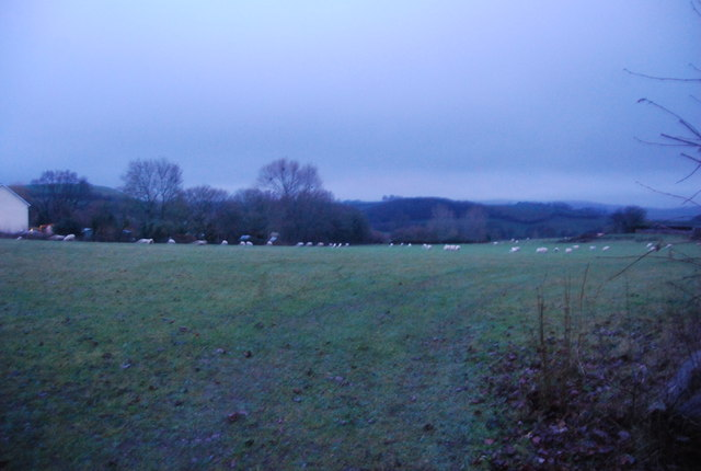 Sheep grazing on the edge of Bicknoller