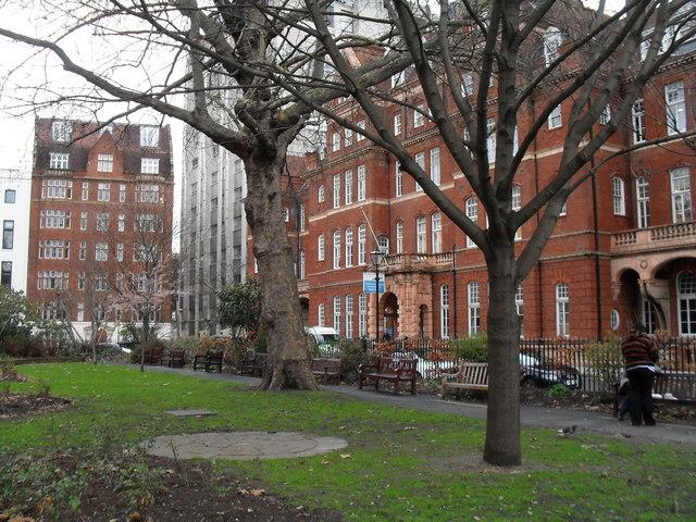 Winter trees in Queen Square Garden
