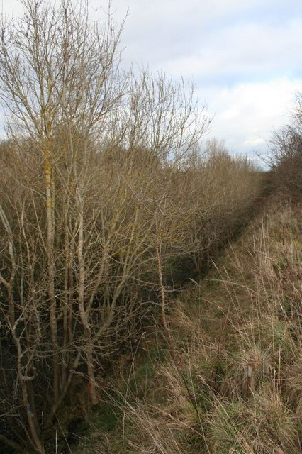 Trees in the cutting