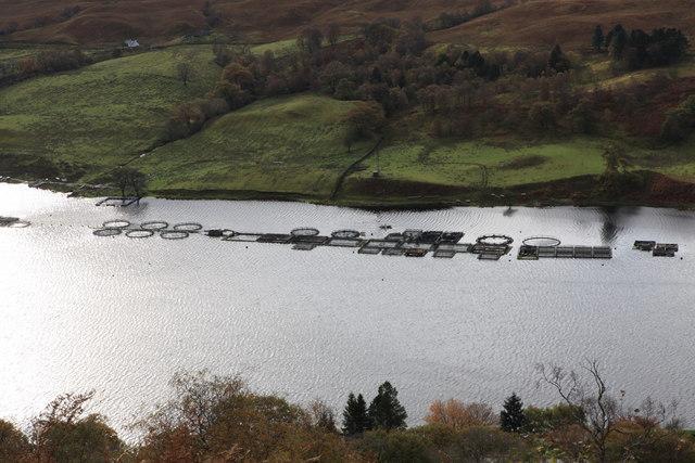 Fish Farms on Loch Awe