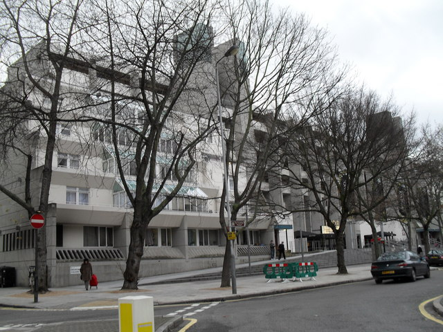 Winter trees outside the Brunswick Centre