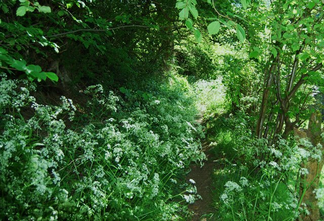 Footpath being overwhelmed with greenery