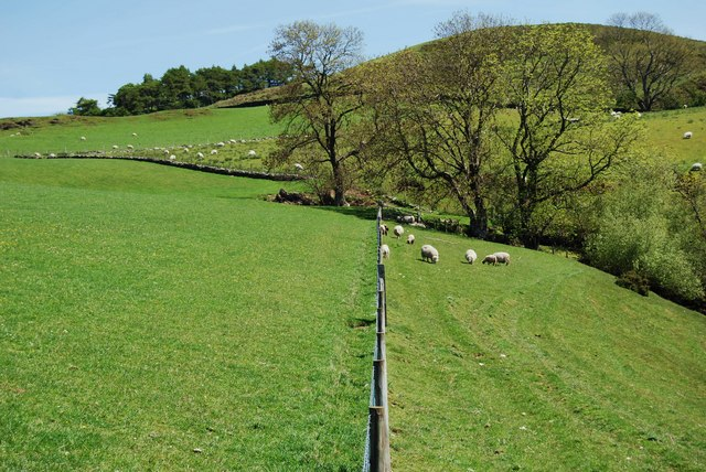A good recently erected sheep fence