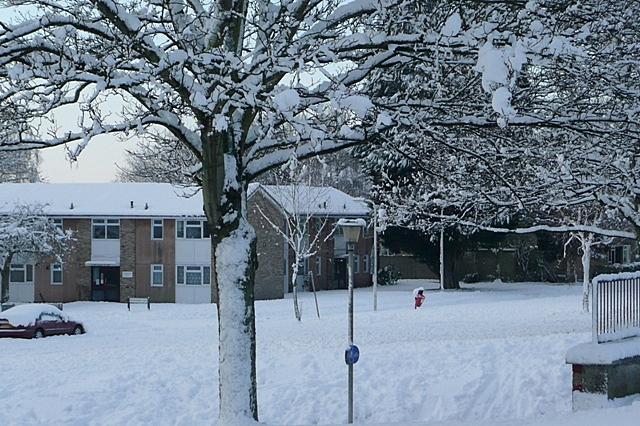 Snowy Southcote