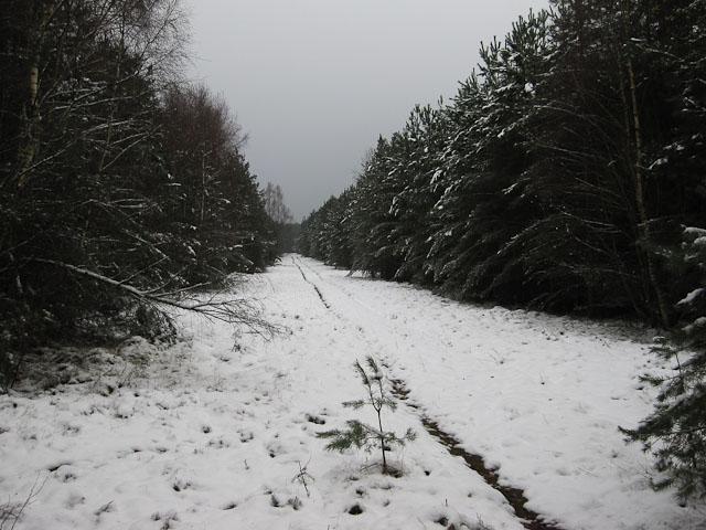 Snowy Santon Warren
