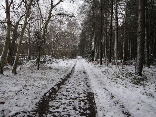 Footpath to Warren Wood