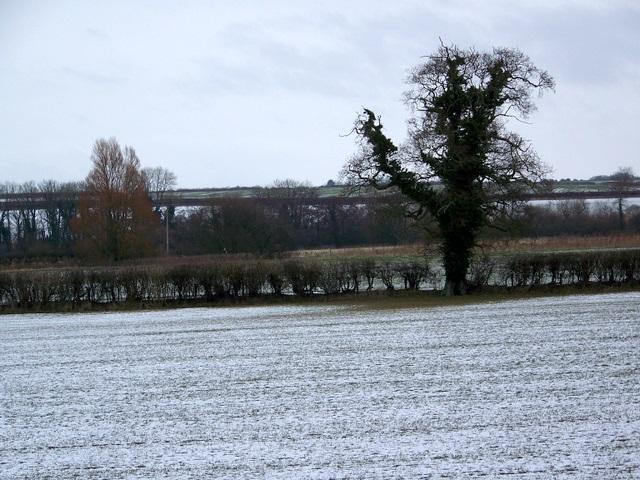 Farmland near Spetisbury