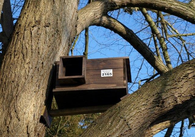 Barn owl box, Tetbury churchyard