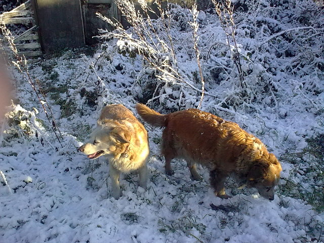 My Dogs in the snow.