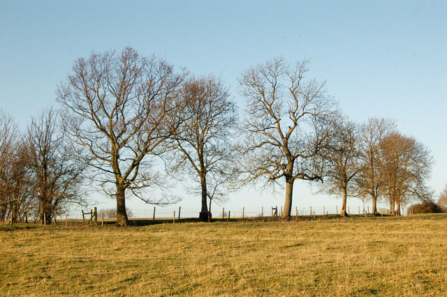 Trees north of the bridleway from Willoughby House to Braunston
