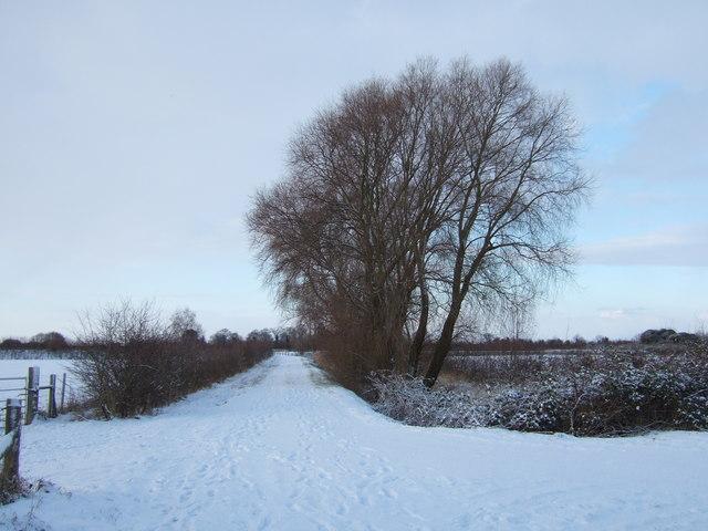 Footpath to Rummers Lane