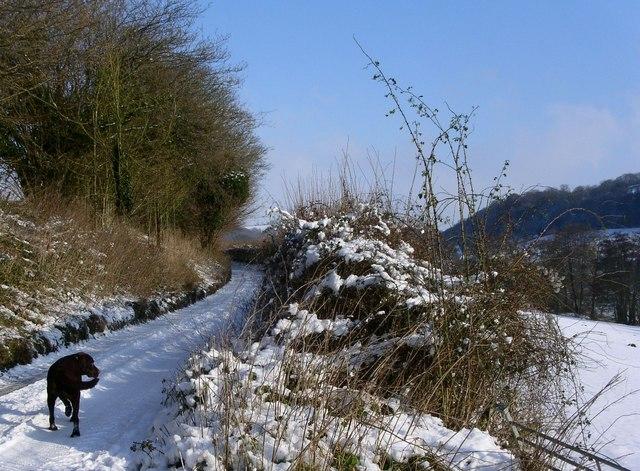Hillmill lane beside Ozleworth Bottom