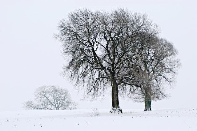 Field of trees, Shropshire.