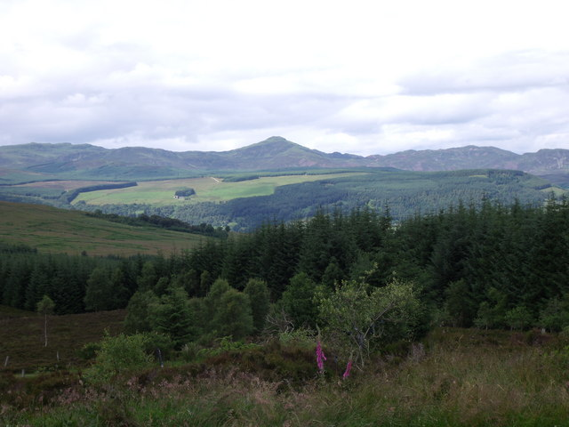 Tay Forest Park with Farragon Hill
