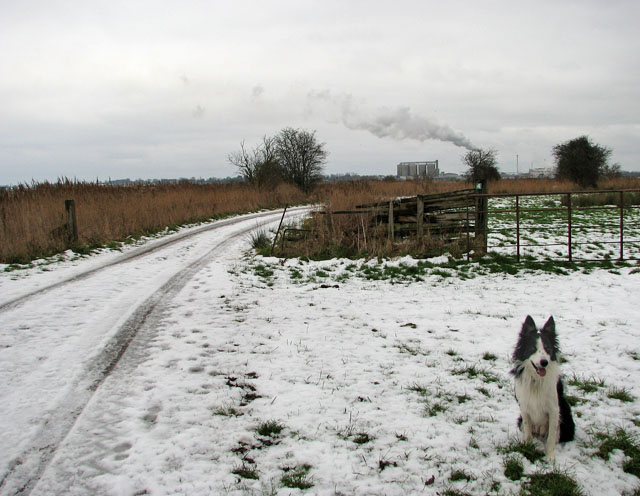 A snowy road in the marshes