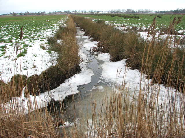 Ice-covered ditch in Hardley Marshes