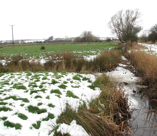 Snow in marsh pastures