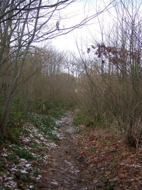 Footpath in Broadwell Wood