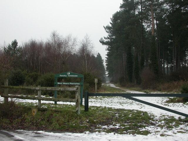 West Moors Plantation