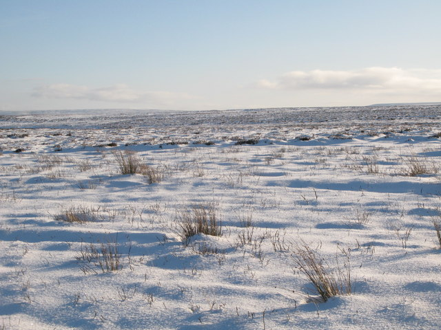 Snowy Burntridge Moor